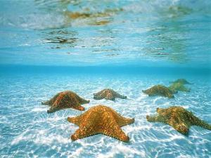 star fish in the ocean