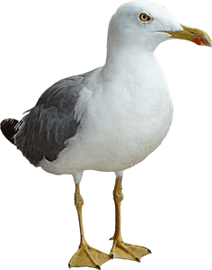 seagull totem