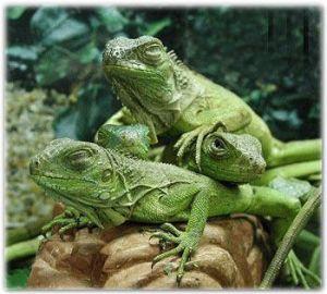 lizards totem