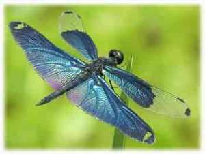 dragonfly totem