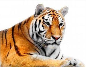 tiger totem