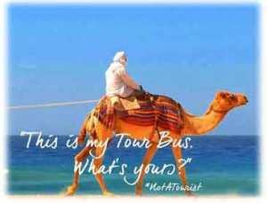camellos turísticos