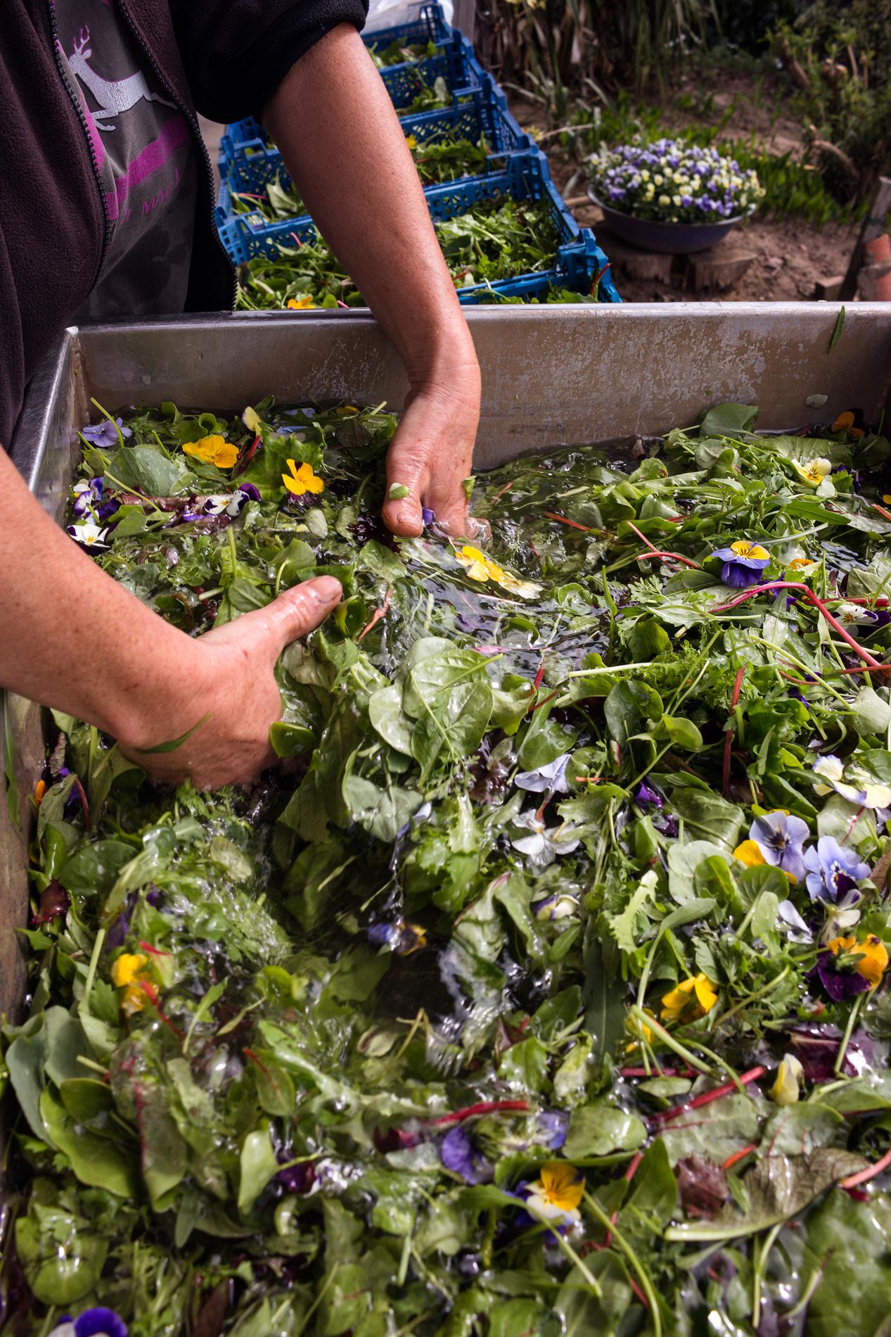 Blütensalat waschen