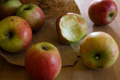 Apfel Geheimrat Dr. Oldenburg