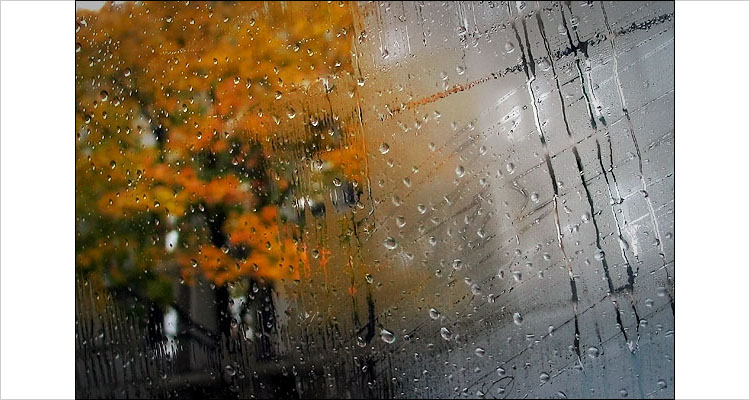 after rain..