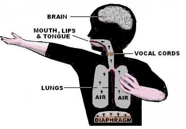 Speech Mechanism