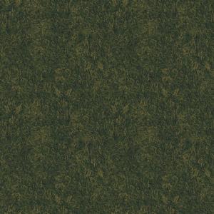 grass field  green