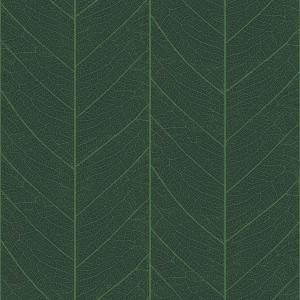 leaf skeleton  green