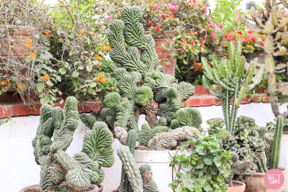 cactus pattern, Innovative biophilic design that surprises with a unique cactus pattern
