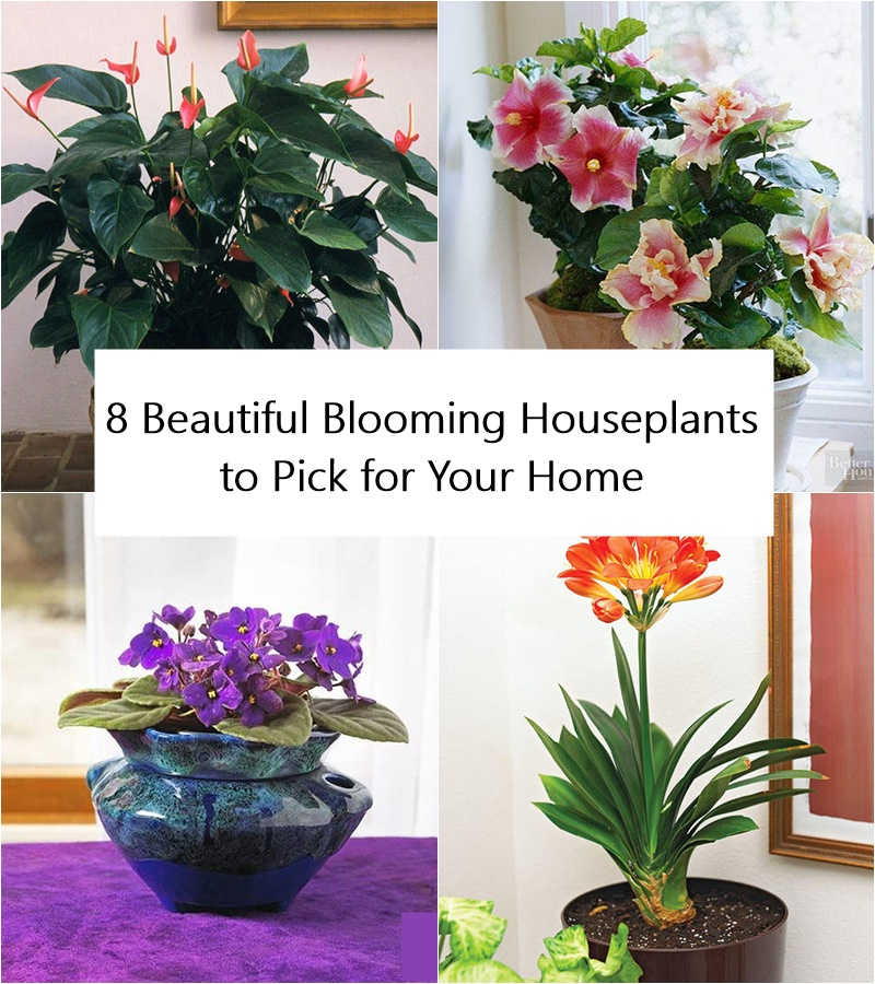 8 Beautiful Blooming Houseplants to Pick for Your Home
