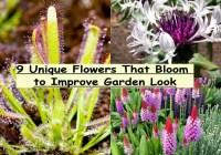 9 Unique Flowers That Bloom To Improve Garden Look