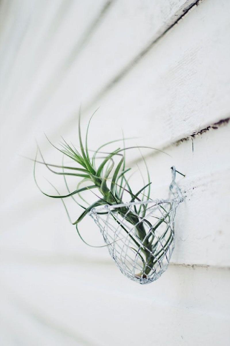 Hang Air Plants