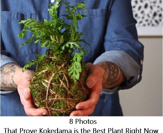 8 Photos That Prove Kokedama is the Best Plant Right Now