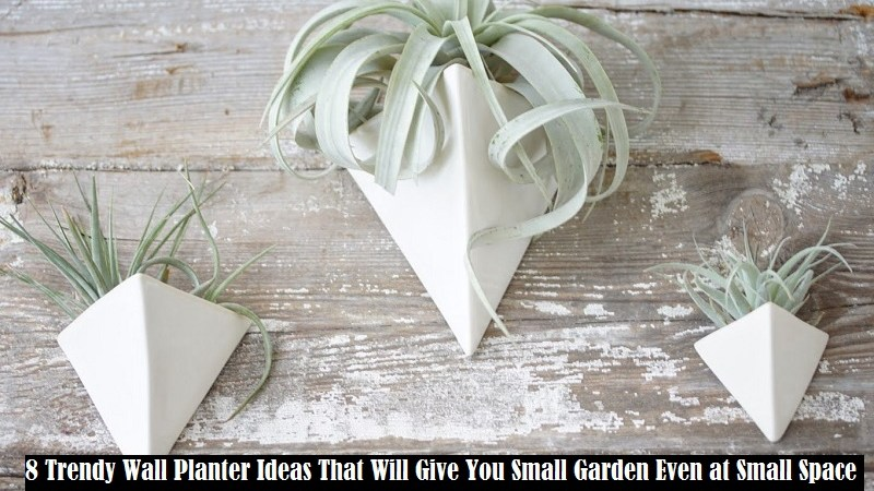 8 Trendy Wall Planter Ideas That Will Give You Small Garden Even at Small Space