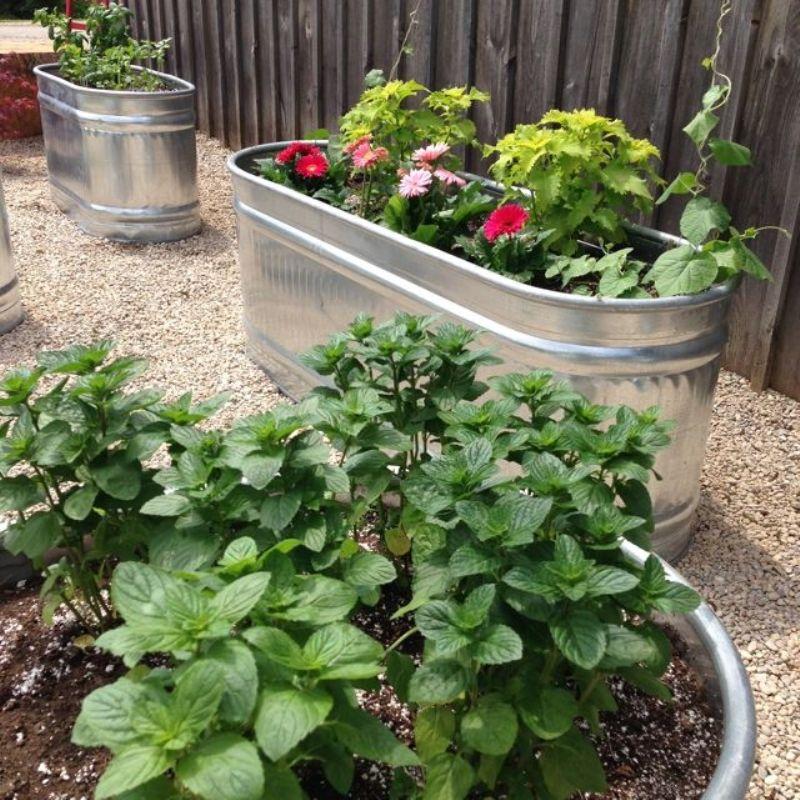 Herbgarden From Galvanized Tubs
