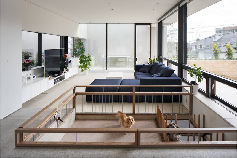 Dog Play In Your Living Room