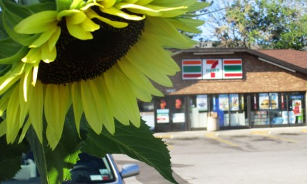 Garden blooming at 7 Eleven on the corner of Clinton and Elmwood