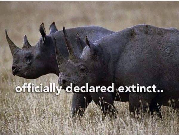 Rhinos compressed