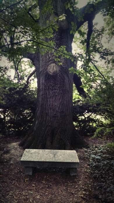 tree george