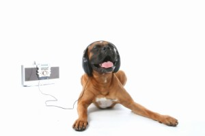 dog_headphones