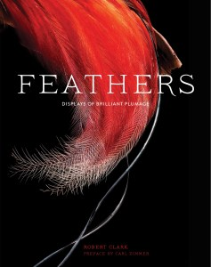 Feathers flat cover