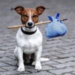 h_en_International_Homeless_Animals_Day