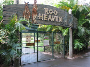 Roo Heaven