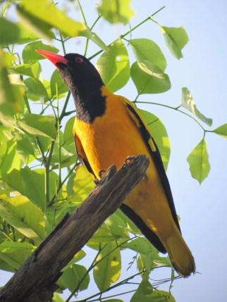 Sri Lankan Birds