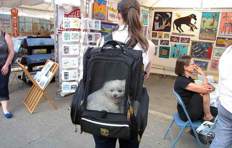 Iowa_City_Arts_Fest_2014_(14364790942).jpg