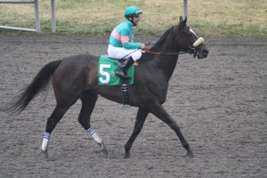 Zenyatta after her win in the 2010 Vanity at Hollywood Park. Photo by Terri Keith.