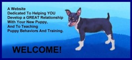 Train Your New Puppy