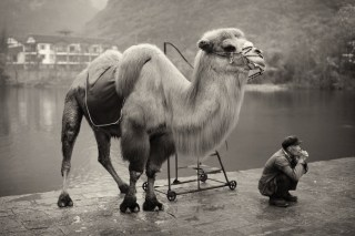 Camel and its owner.