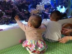 Ooo big fishes!