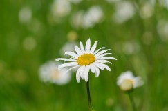 I am not a flower person but I love playing with this lens to see those bokeh!