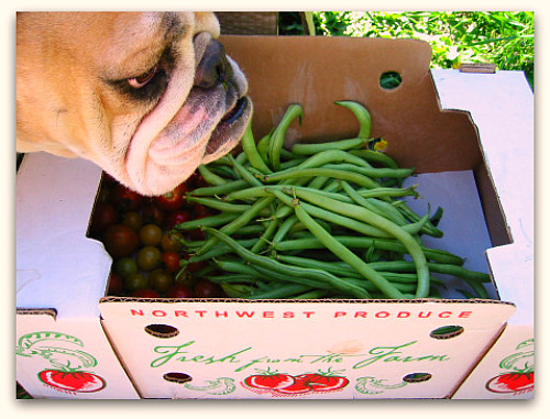 Green Bean Ninjas: Attack of the Famished Bulldogs