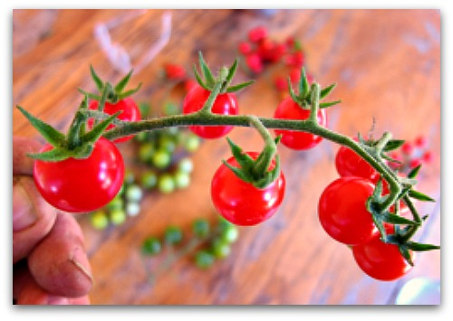 Snip It: The Best Way to Pick Cherry Tomatoes