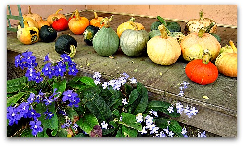 pumpkins on the porch