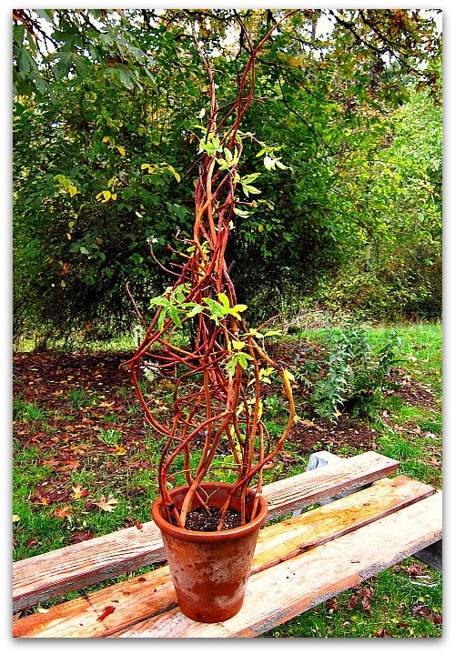 How to Make a Trellis for Your Potted Plants