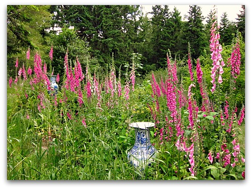Lawn to Meadow: Gardening on the Wild Side