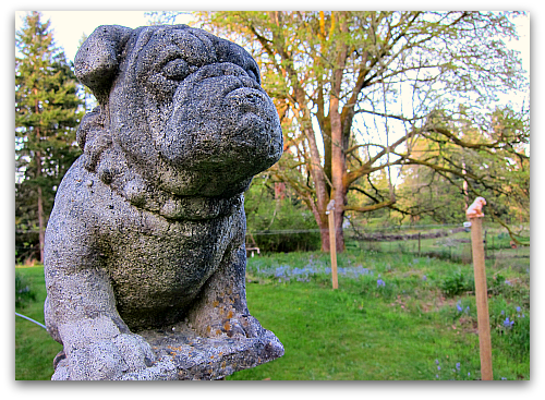 farm photo of kiwi vine trellis bulldog finials