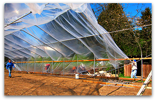 building a hoophouse greenhouse