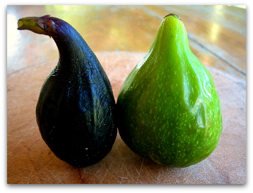 How to Know When a Fig Is Ripe and Ready to Pick