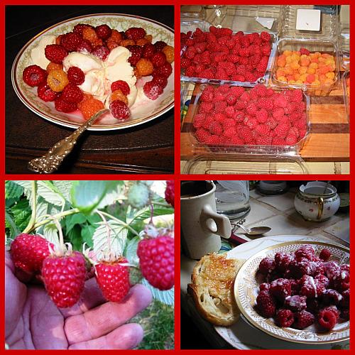 Raising Canes: Tulameen Raspberry a Juicy Choice!