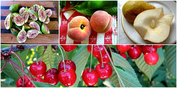 orchard fruit cherries figs peaches pears