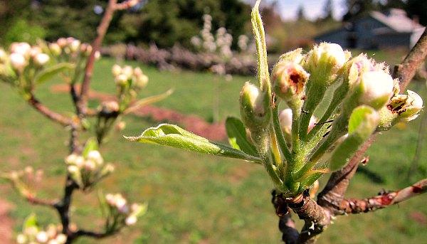Tácticas de asustar: Gestión de aves | Buen cultivador de frutas