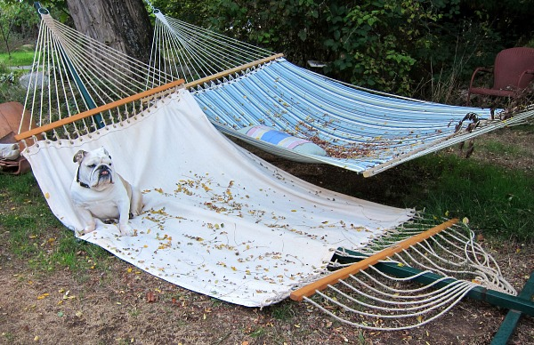 Boz like this stable hammock better