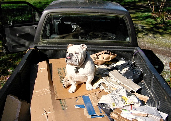 Boz and Little Gray were all about the dump runs.