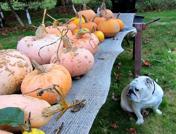 Boz knows; where there are pumpkins, there is pie.