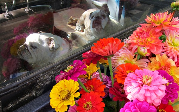Flower delivery beat manure-hauling any day.