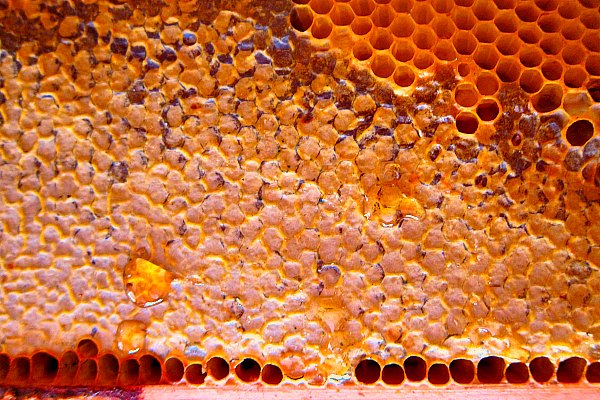 golden honeycomb honey